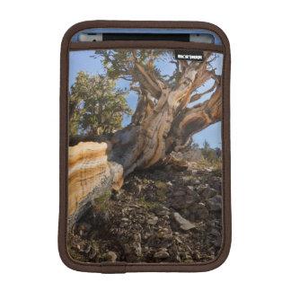 USA, California, Inyo National Forest 12 iPad Mini Sleeves