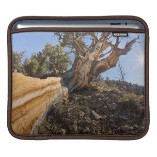USA, California, Inyo National Forest 12 iPad Sleeve