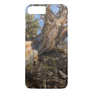 USA, California, Inyo National Forest 12 iPhone 8 Plus/7 Plus Case