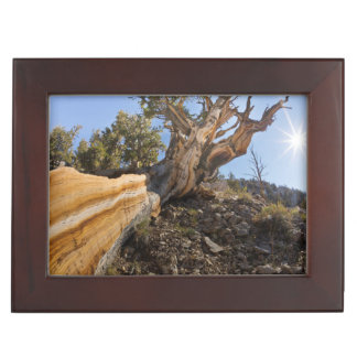 USA, California, Inyo National Forest 12 Keepsake Box