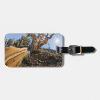 USA, California, Inyo National Forest 12 Luggage Tag