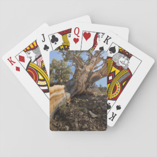 USA, California, Inyo National Forest 12 Playing Cards