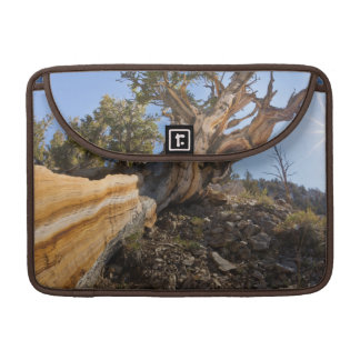 USA, California, Inyo National Forest 12 Sleeve For MacBooks