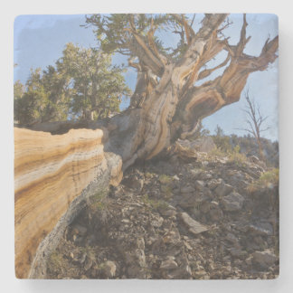 USA, California, Inyo National Forest 12 Stone Coaster