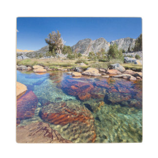 USA, California, Inyo National Forest 4 Wood Coaster
