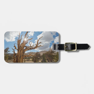 USA, California, Inyo National Forest 6 Bag Tag