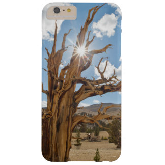 USA, California, Inyo National Forest 6 Barely There iPhone 6 Plus Case