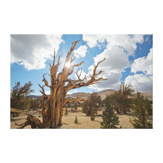 USA, California, Inyo National Forest 6 Canvas Prints