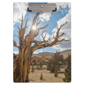 USA, California, Inyo National Forest 6 Clipboard