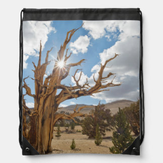 USA, California, Inyo National Forest 6 Drawstring Bag