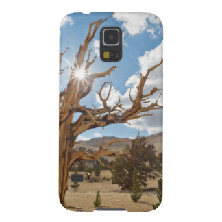 USA, California, Inyo National Forest 6 Galaxy S5 Case