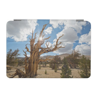 USA, California, Inyo National Forest 6 iPad Mini Cover
