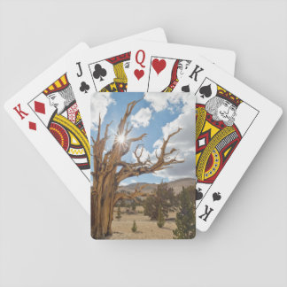 USA, California, Inyo National Forest 6 Playing Cards