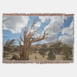 USA, California, Inyo National Forest 6 Throw Blanket
