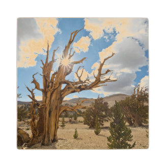USA, California, Inyo National Forest 6 Wood Coaster