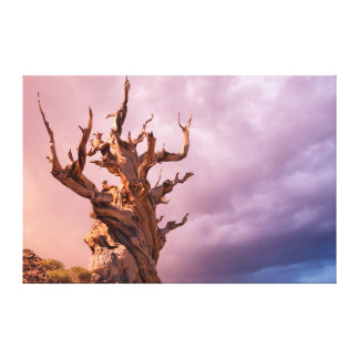USA, California, Inyo National Forest 8 Gallery Wrapped Canvas