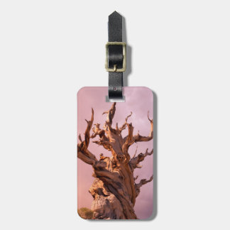 USA, California, Inyo National Forest 9 Bag Tag