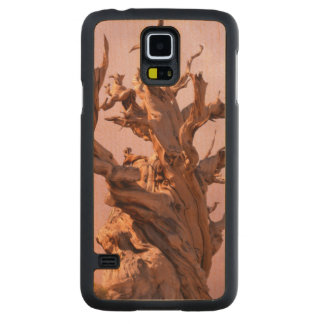 USA, California, Inyo National Forest 9 Carved Maple Galaxy S5 Case