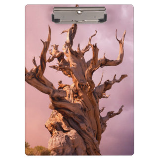 USA, California, Inyo National Forest 9 Clipboard