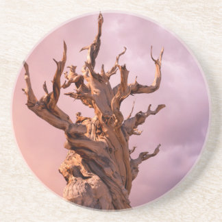 USA, California, Inyo National Forest 9 Coaster
