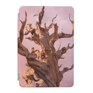 USA, California, Inyo National Forest 9 iPad Mini Cover