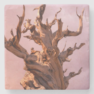USA, California, Inyo National Forest 9 Stone Coaster