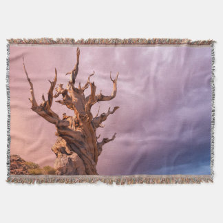 USA, California, Inyo National Forest 9 Throw Blanket
