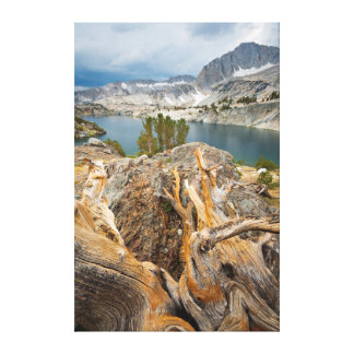 USA, California, Inyo National Forest. Stretched Canvas Print