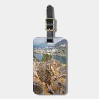 USA, California, Inyo National Forest. Luggage Tag
