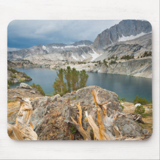 USA, California, Inyo National Forest. Mouse Mat