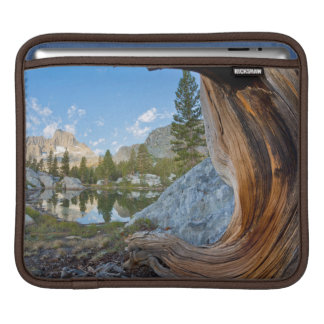 USA, California, Inyo National Forest. Old Pine iPad Sleeve