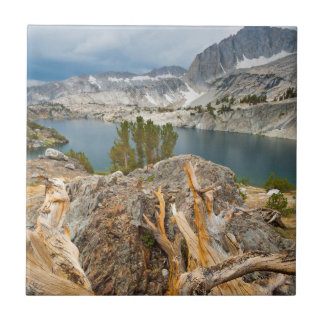 USA, California, Inyo National Forest. Tile