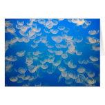 USA, California. Jellyfish In The Monterey Bay Card