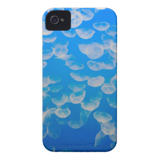 USA, California. Jellyfish In The Monterey Bay iPhone 4 Case