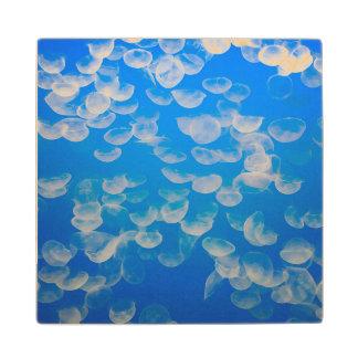 USA, California. Jellyfish In The Monterey Bay Wood Coaster