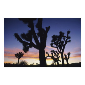 USA, California, Joshua Tree National Park, Art Photo