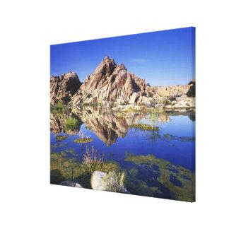 USA, California, Joshua Tree National Park, Gallery Wrap Canvas