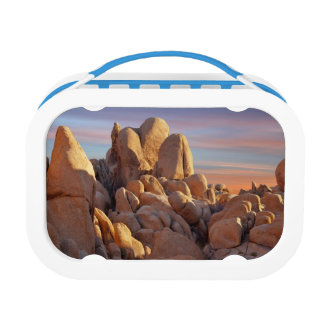 USA, California, Joshua Tree National Park Lunch Box
