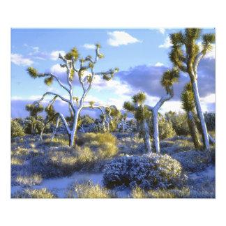 USA, California, Joshua Tree National Park. Photo Art