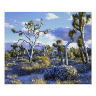 USA, California, Joshua Tree National Park. Poster