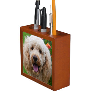USA, California. Labradoodle Looking At You Desk Organiser