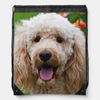 USA, California. Labradoodle Looking At You Drawstring Bag