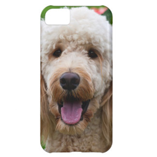 USA, California. Labradoodle Looking At You iPhone 5C Case