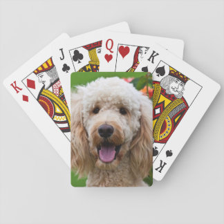 USA, California. Labradoodle Looking At You Playing Cards