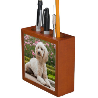 USA, California. Labradoodle Lying By Fountain Desk Organiser