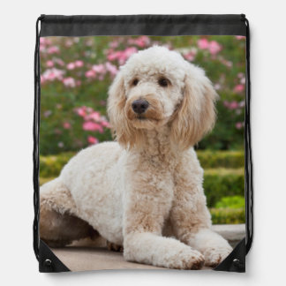 USA, California. Labradoodle Lying By Fountain Drawstring Bag