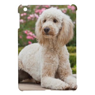 USA, California. Labradoodle Lying By Fountain iPad Mini Cases
