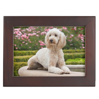 USA, California. Labradoodle Lying By Fountain Keepsake Box