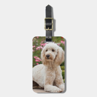 USA, California. Labradoodle Lying By Fountain Luggage Tag