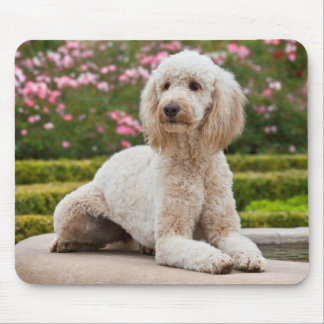 USA, California. Labradoodle Lying By Fountain Mouse Mat